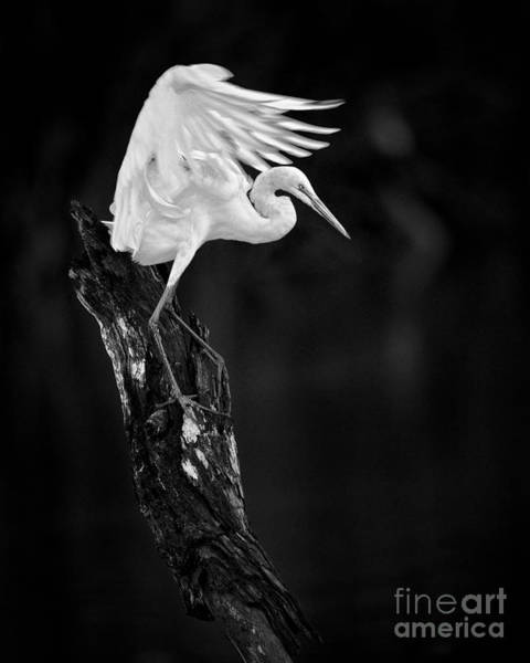 Photograph - Spread Your Wings by Patrick M Lynch