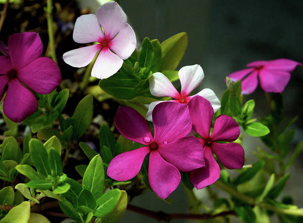 Photograph - Summer Blossoms by Karen Harrison