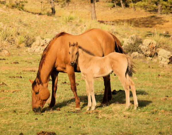 Mare And Foal Photograph - Spring Colt by Jeff Swan