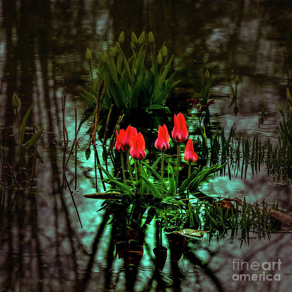 Photograph - Spring Flood by Roger Monahan