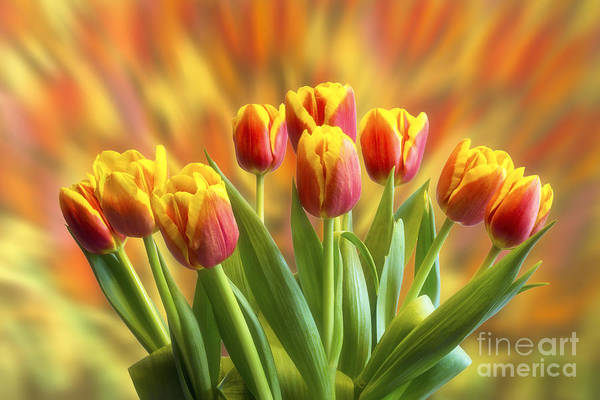 Wall Art - Photograph - Spring Flowers by Veikko Suikkanen