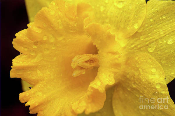 Photograph - Spring Showers by Karen Adams