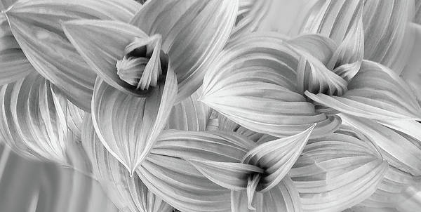 Photograph - Spring's Dance Of Form by Wayne King