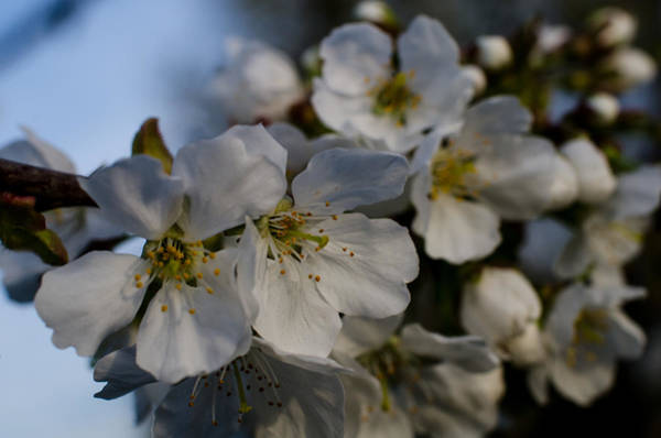 Photograph - Spring's Welcome by Miguel Winterpacht