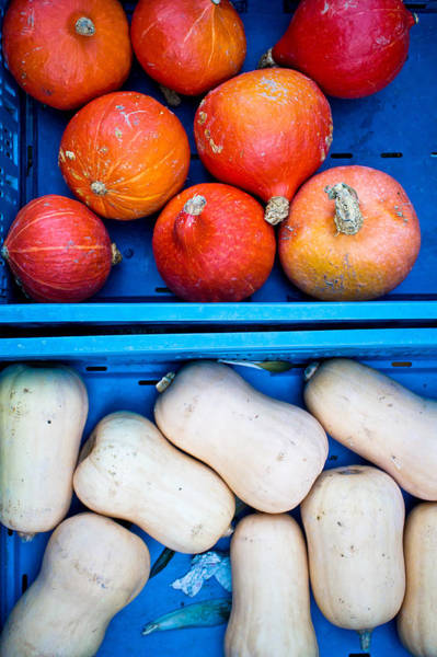 Vegetable Patch Wall Art - Photograph - Squashes by Tom Gowanlock