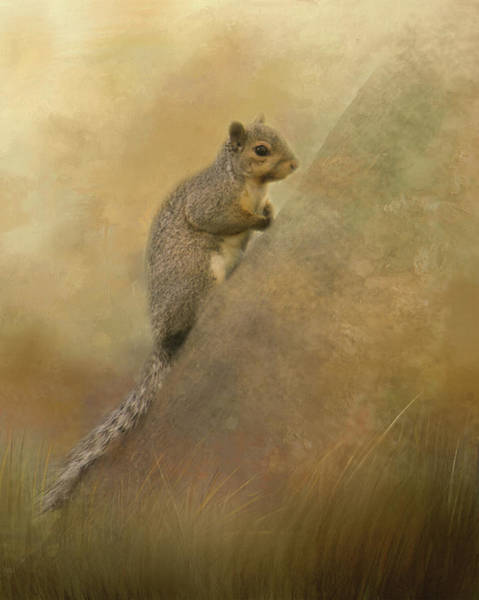 Photograph - Cute Squirrel by Marilyn Wilson