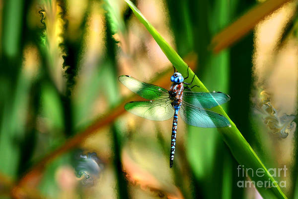 Photograph - Stained Glass Dragonfly by Lisa Redfern