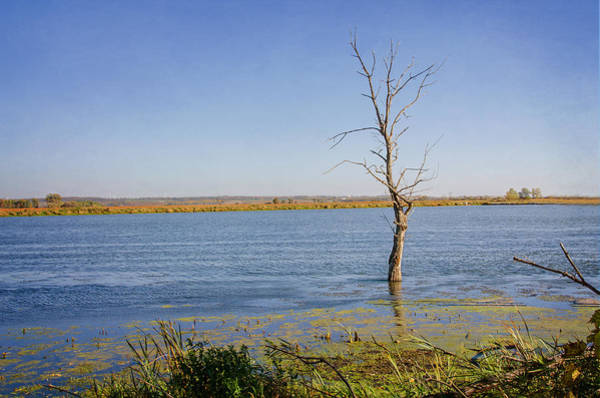 Horicon Marsh Photograph - Stand Alone by Susan McMenamin