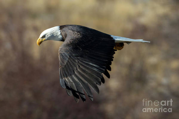 Wall Art - Photograph - Staring Down by Mike Dawson