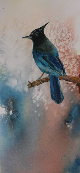 Painting - Steller's Jay by Ruth Kamenev