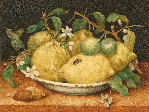 Italian Painters Wall Art - Painting - Still Life With Bowl Of Citrons by Giovanna Garzoni