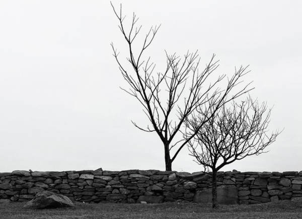 Photograph - Stone Wall With Trees In Winter by Nancy De Flon