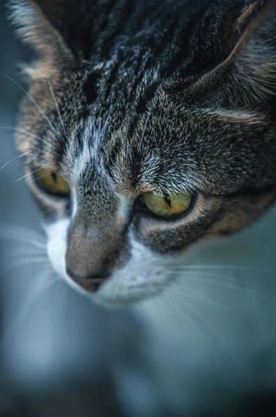 Looking Down Wall Art - Photograph - Stray Cat by Carlos Caetano