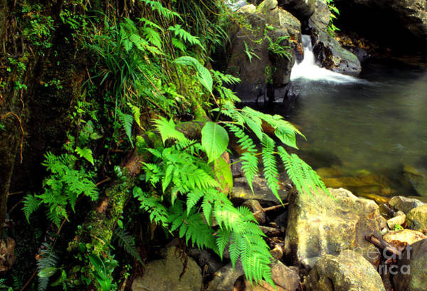Photograph - Stream El Yunque National Forest by Thomas R Fletcher