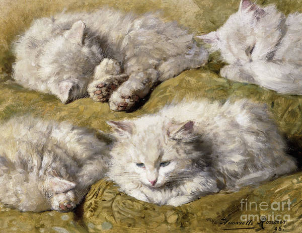 Curl Up Painting - Studies Of A Long Haired White Cat by Henriette Ronner-Knip