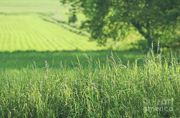 Wall Art - Photograph - Summer Fields Of Green by Sandra Cunningham