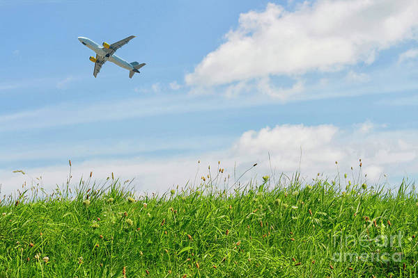 Wall Art - Photograph - Summer Flying by Patricia Hofmeester