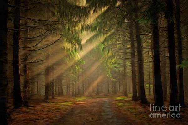 Wall Art - Digital Art - Sun Rays In The Forest by Michal Boubin