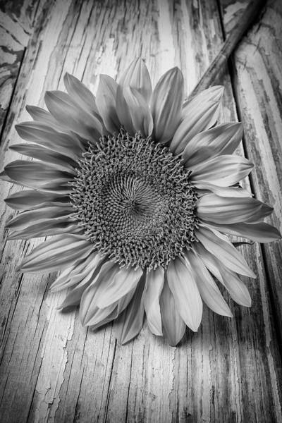 Single Leaf Wall Art - Photograph - Sunflower Black And White by Garry Gay