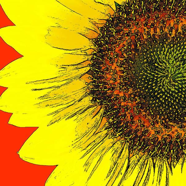 Wall Art - Photograph - Sunflower by David G Paul
