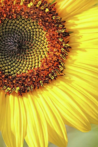 Wall Art - Photograph - Sunflower Macro by Jennie Marie Schell