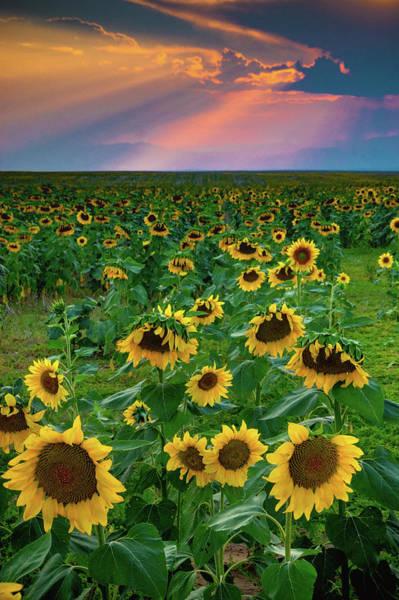 Photograph - Sunflowers And Sunrays by John De Bord