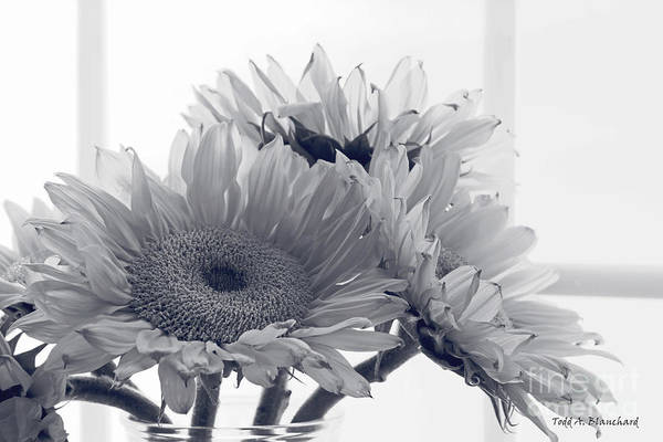 Photograph - Sunflowers by Todd Blanchard