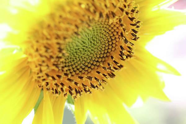 Photograph - Sunny Days by Trina Ansel