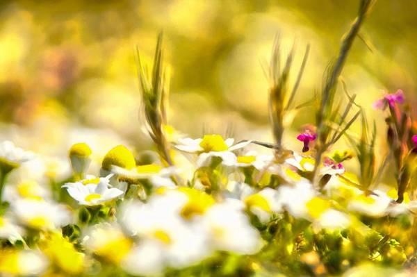 Digital Art - Sunny Flowers by Michael Goyberg