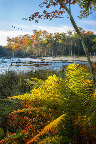 Photograph - Sunrise In The Swamp by Bill Wakeley