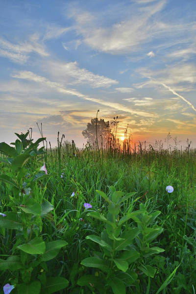 Photograph - Sunrise In West Glacial Park by Ray Mathis
