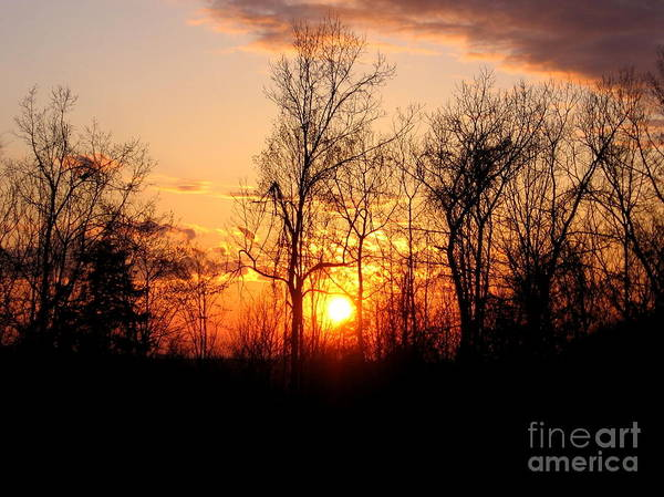 Photograph - Sunset And Silhouetted Trees by Rose Santuci-Sofranko