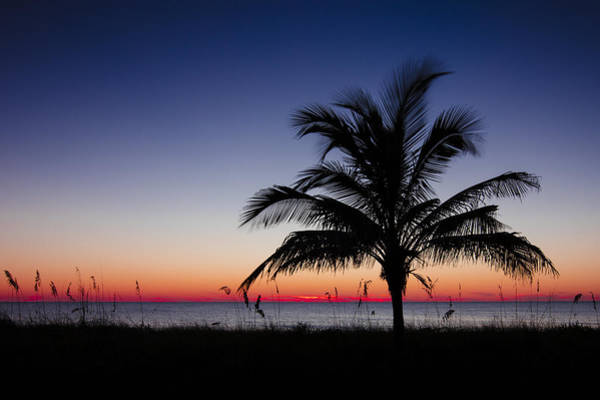 Photograph - Sunset Palm by Sean Allen
