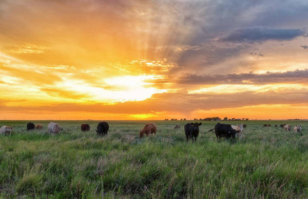 Photograph - Sunset Pastures by Russell Pugh