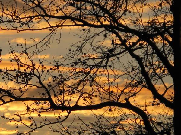 Wall Art - Photograph - Sunset Silhouettes by Valia Bradshaw
