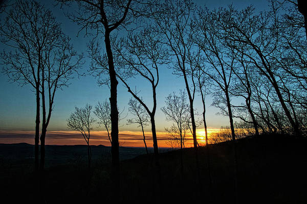 Photograph - Sunset Trees by George Taylor