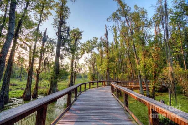 Photograph - Swamp Garden Magnolia Plantation by Dustin K Ryan
