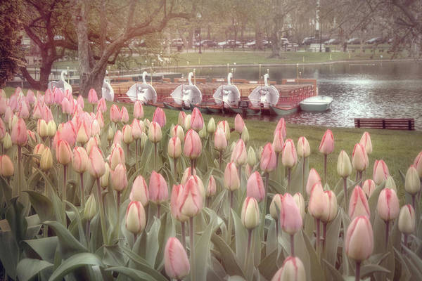 Wall Art - Photograph - Swan Boats And Tulips - Boston Public Garden by Joann Vitali