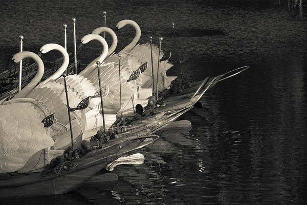 Swan Boats Photograph - Swan Boats In A River, Boston Public by Panoramic Images
