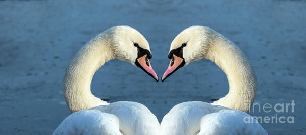 Wall Art - Photograph - Swans Portrait by Odon Czintos
