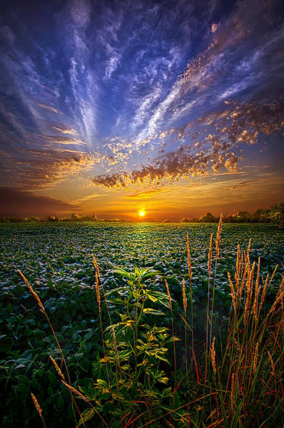 Photograph - Sweet Surrender by Phil Koch