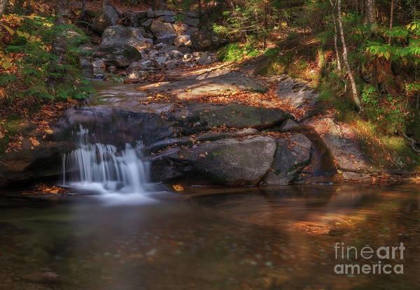 Photograph - Swirls by Sharon Seaward