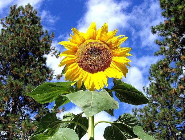 Wall Art - Photograph - Tall And Sunny by Will Borden