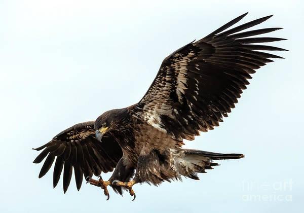 Talon Photograph - Talons First by Mike Dawson