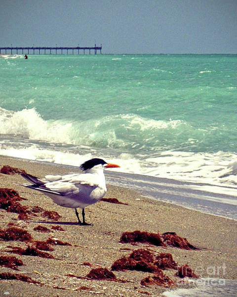 Wall Art - Photograph - Terns On The Beach by Chris Andruskiewicz