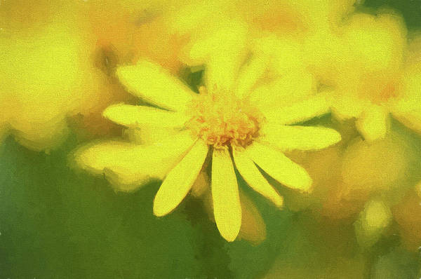 Photograph - Texas Wildflower 2 by Victor Culpepper