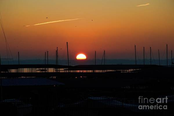 Photograph - The Arrival by Diana Mary Sharpton