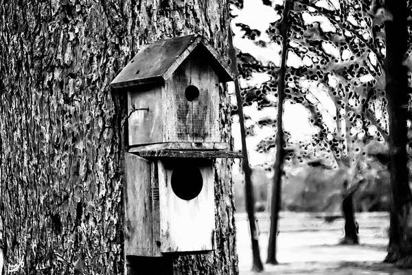 Photograph - The Bird Feeder by Gina O'Brien