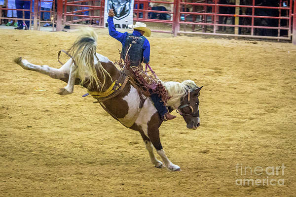 Prca Wall Art - Photograph - The Bucking Horse by Rene Triay Photography