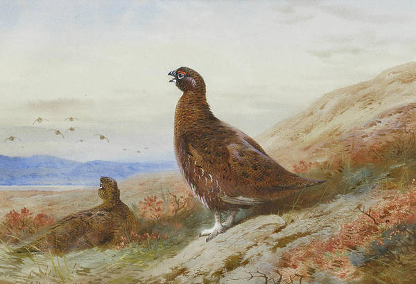 Painting - The Challenge by Archibald Thorburn